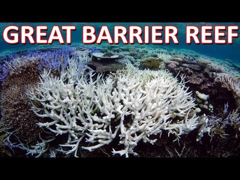 Top 10 Fresh Facts About The Great Barrier Reef | List 10