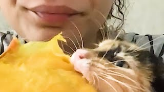 VIRAL MIX 16 - Cats, dogs, reptiles \u0026 more.