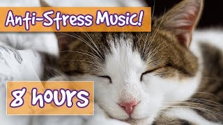 Songs for nervous cats! soothing music to calm your hyperactive, anxious cat and help with sleep! ????