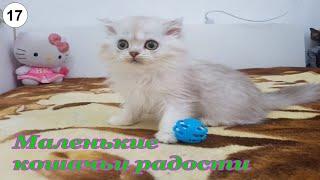 Маленькие кошачьи радости. #Кошки #Коты #Котята #Прикольные #Веселые #Красивые #Играют