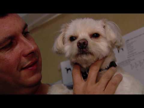 Lt. John Garrido's Rescue Dog Story