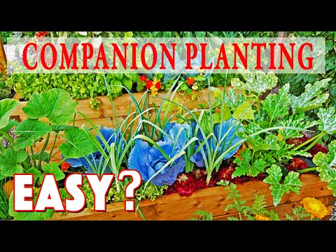 Companion Planting Made Easy! How To Guide