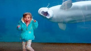 BEST FUNNY BABIES AND KIDS AT THE AQUARIUM | Funny Babies And Animals Compilation