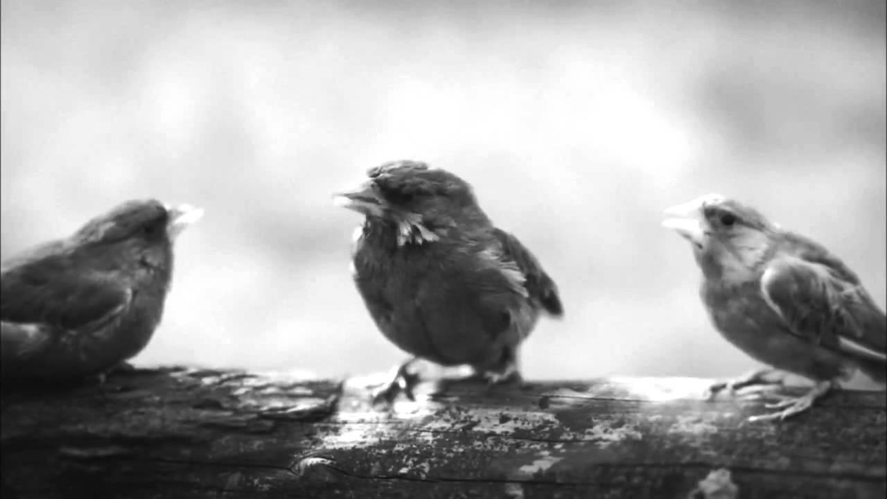 Beatbox Bird Unexpected Tweet Beatboxing Bird Official Advert Youtube