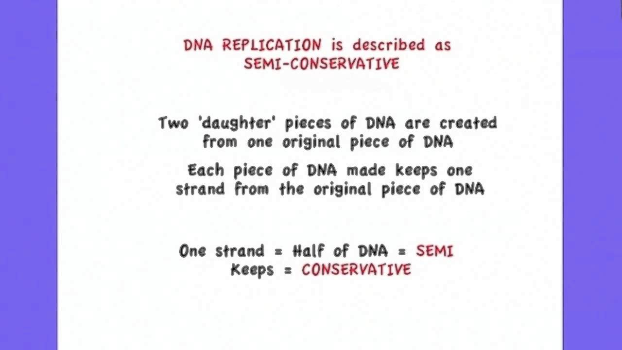 27 replication of dna is semi conservative and depends on 27 replication of dna is semi conservative and depends on complementary base pairing malvernweather Images