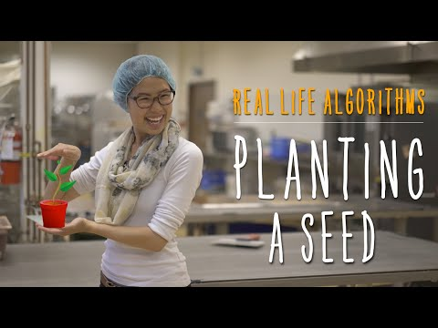 Real Life Algorithms - Unplugged activity: planting a seed