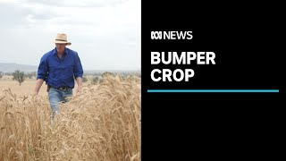 Grain harvest tipped to be second biggest on record, as China trade tensions escalate | ABC News