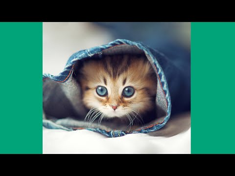 Best Kitten Vines – The Cutest New Kitten and Cat Vines Compilation 2015