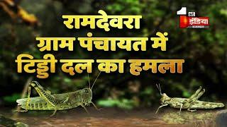 Locust Attack: सरहदी जिले Jaisalmer में भी  टिड्डी ने मचा रखा है आतंक, मिनटों में खड़ी फसल कर जाती है