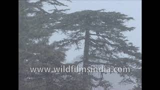 Snowfall in Landour, as seen from Emily's at Rokeby Manor: from 'See Monkey Use Stick' balcony
