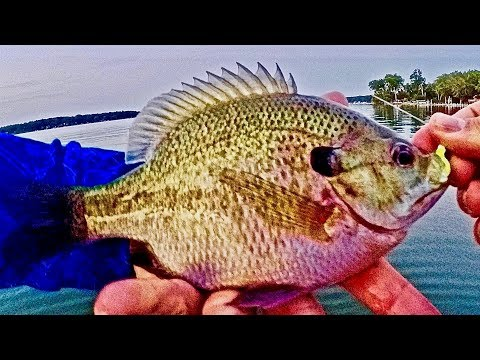 Fishing for Big Bluegill (Fishing How to's/Tip's and Technique's) Your Videos