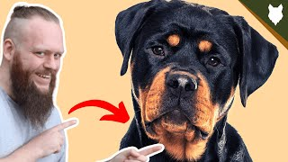 BEST PRODUCTS FOR YOUR ROTTWEILER