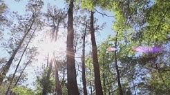 In Your Backyard: Jacksonville Arboretum