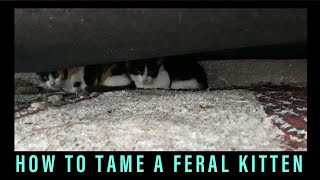 How to tame a feral kitten