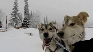 Junior Iditarod Sled Dog Race 2017