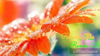 Rendangula roja song
