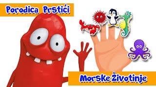 PORODICA PRSTICI - MORSKE ZIVOTINJE 1 - SONG 1