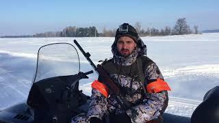 Загонная охота зимой на дикого кабана с собаками