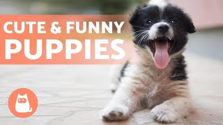 CUTE and FUNNY PUPPIES Video Compilation 🐶 Cuteness Overload!