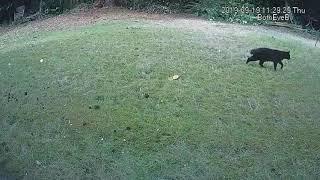 2019-09-19 11 29 22 11 29 41M0@00 black cat stubby tail