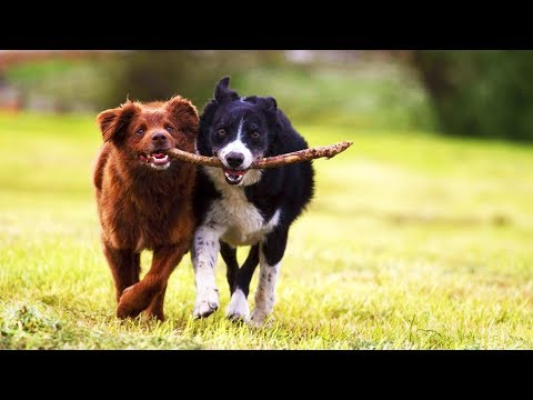 Funny Dogs 😂 Cute Dogs Playing (Part 1) [Funny Pets]