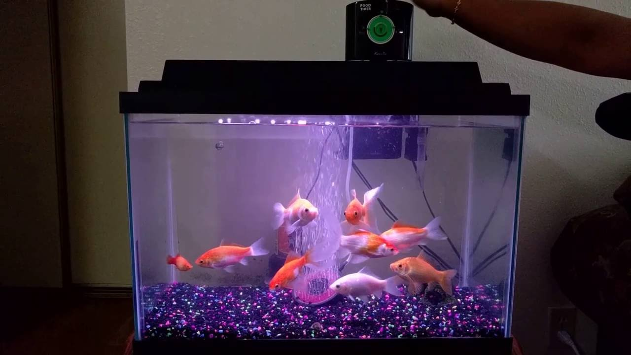 Aquarium fish tank automatic fish feeder - Kedsum Automatic Aquarium Fish Feeder