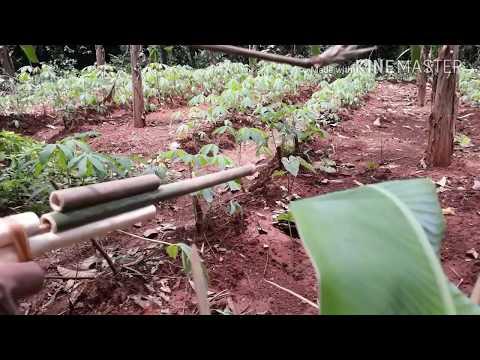 WOW amazing Cara membuat tembakan/panah dari bambu