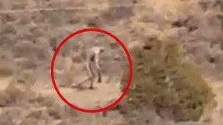 5 Aterradoras y misteriosas Criaturas grabadas en Video   Nuevo Criatura grabada en Portugal