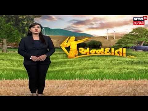 Learn organic farming of Mango   ANNADATA   News18 Gujarati