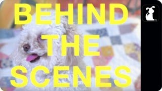 Miley Cyrus Pet Parody - Maltey Cyrus Behind the Scenes