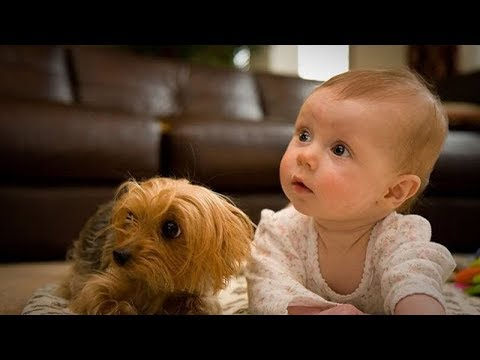 Baby and Pet - The Dog Makes Friends With The Baby # 6 | BABY AND PET