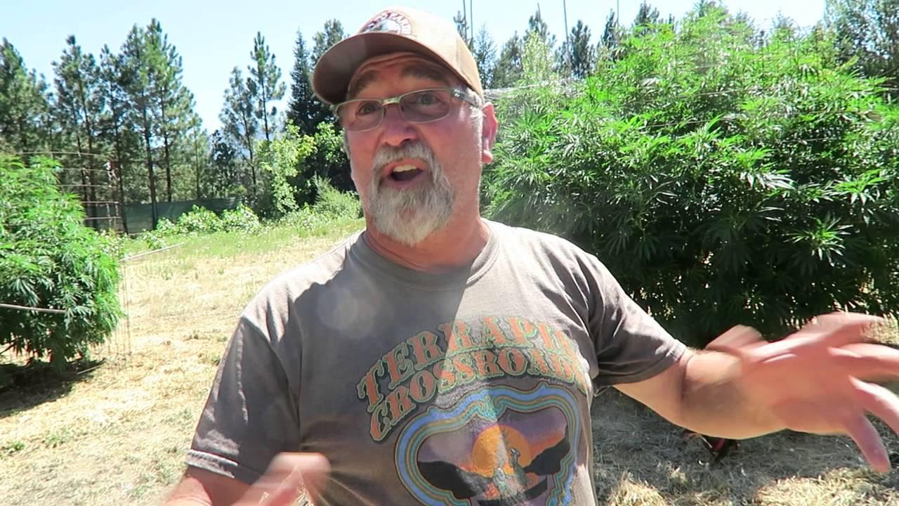 Grow Marijuana: Organic Outdoor Marijuana Garden in Oregon