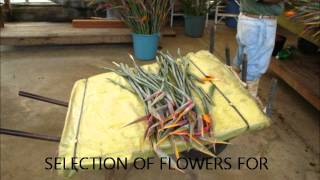 Birds of Paradise Cultivation & production