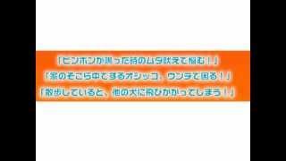 詳細はこちら http://www.infotop.jp/click.php?aid=44697&iid=23641 犬...