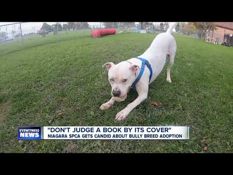Niagara SPCA Gets Candid About