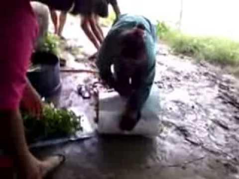 การศึกษาการปลูกผักบุ้ง