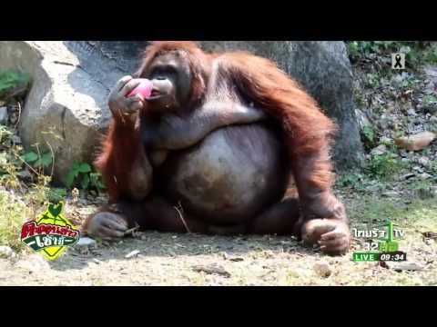 ย้อนหลัง แจกหวานเย็น คลายร้อนให้สัตว์   26-04-60   ตะลอนข่าวเช้านี้