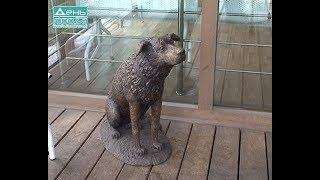 Владимир Панов посетил приют для животных «Сострадание НН»