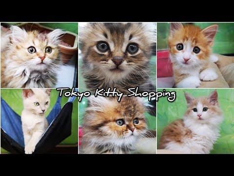 KITTY 🐱 SHOPPING TOKYO 🐈 cute CATS Pet Shop 📽️ HUAWEI P20 PRO