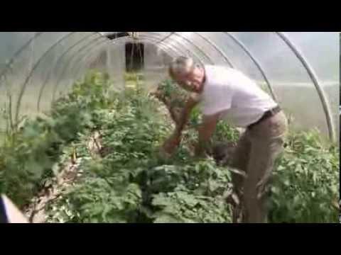 Современное производство продуктов питания и сельское хозяйство. Нестандартная модель.