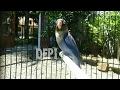 Burung Lovebird ini sudah mati dua tahun lalu