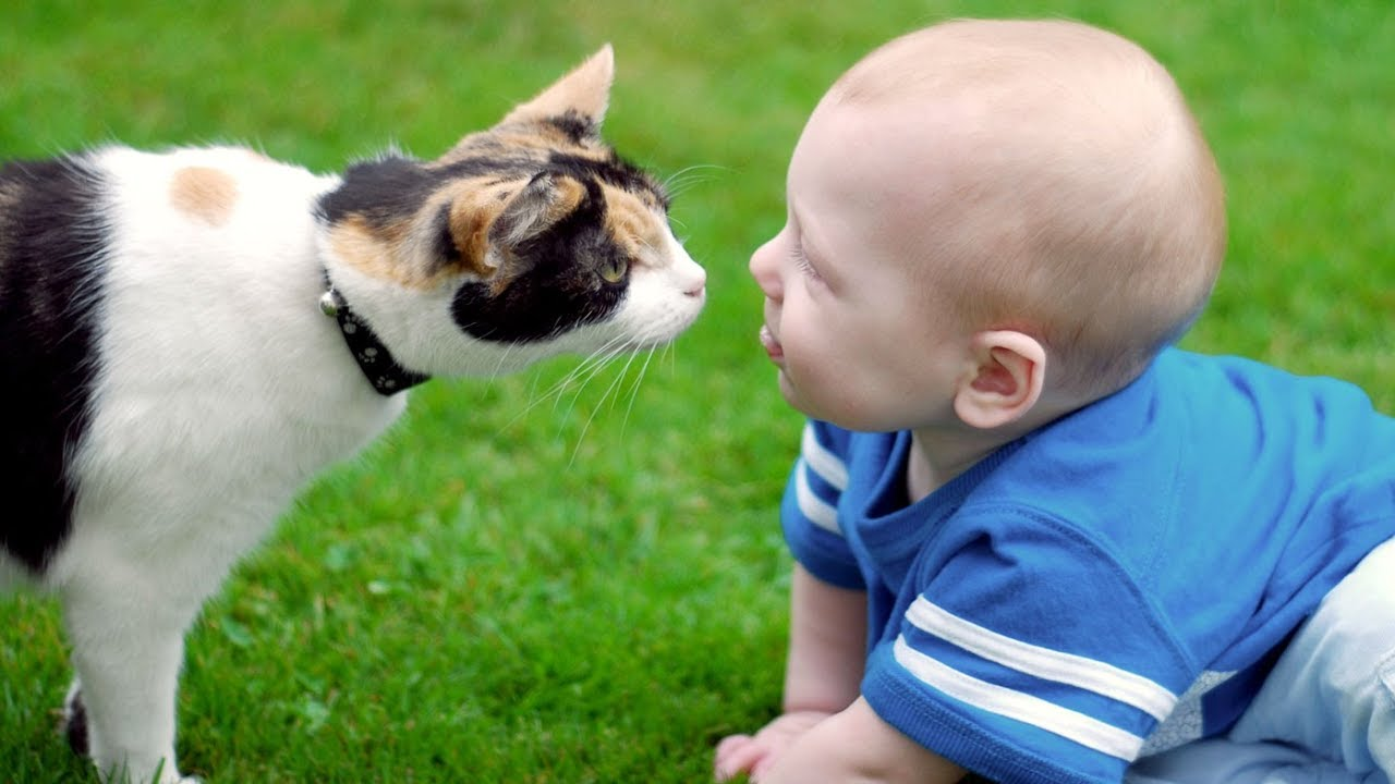 Cats And Dogs Meeting Babies For The First Time 2017 Youtube