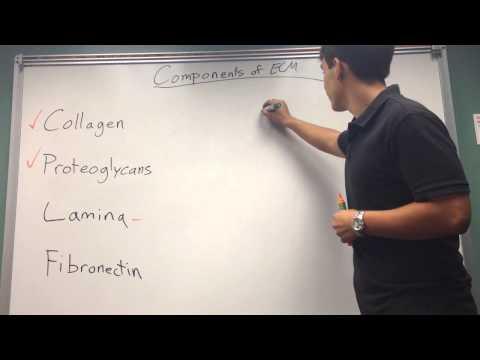 Components of ECM