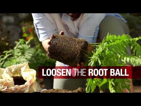 How to Plant a Garden | Troy-Bilt®