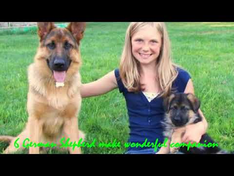 10-reasons-why-german-shepherd-is-a-good-family-dog