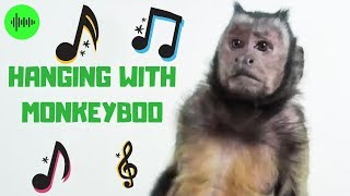 Hanging With MonkeyBoo! (OFFICIAL VIDEO)