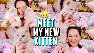 MEET MY KITTEN!