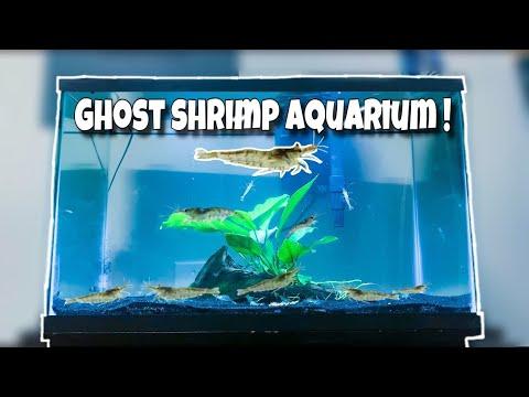 My NEW EXOTIC Ghost Shrimp *ONLY* Aquarium!!