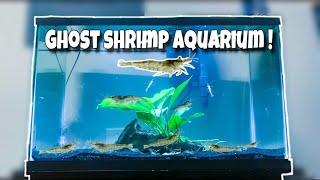my-new-exotic-ghost-shrimp-only-aquarium