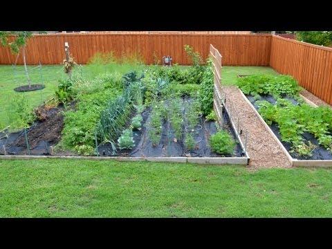 Chef S Vegetable Garden Update Youtube